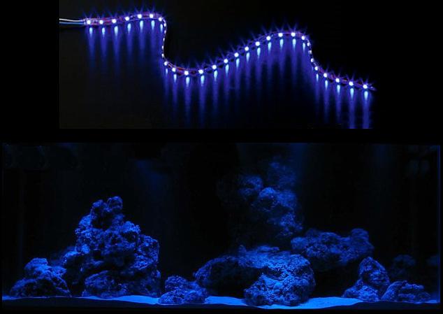 Blaue Aquarium Beleuchtung | Creative Lights Der Onlineshop Fur Licht Und Design Aquarium